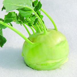 Semences bio sans ogm Chou-pomme, Colrave Lanro (blanc)