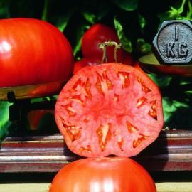 Semences bio sans ogm Tomates  Babuschka Sélection Z