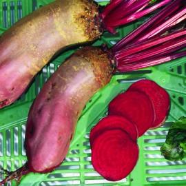 Semences bio sans ogm Betterave à salade