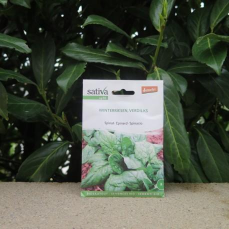 Semences bio épinard - Winterriesen, Verdil KS